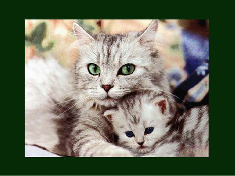 Állati szeretet 19