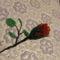 piros rózsa bimbó