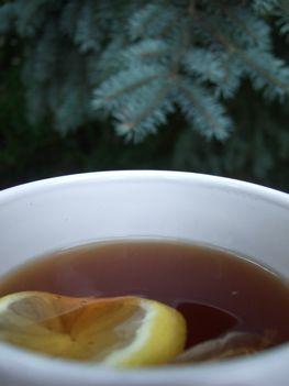 citromos fenyő-tea