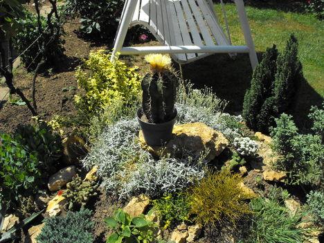 sziklakerti kaktuszok