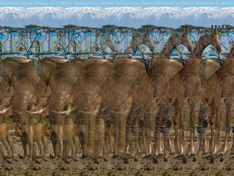Elefántok, zsiráfok, zebrák?