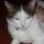 Mimi edes kis macskai: Piszu (a tigris), Bubi ( a foltos kandur), Pufi (a kis voros roka)