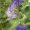 2007aug, virágok