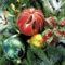 Karácsony és Mikulás 15
