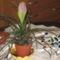 Köveim, virágaim 014