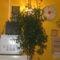 Köveim, virágaim 022