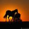 lovak-es-naplemente-kep