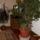 szoba növények