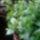 Gardenia_bokrok_488741_80137_t