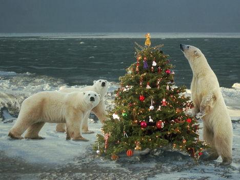 Ők is karácsonyoznak