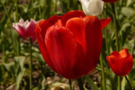 a dla mamy  kwiatuszek
