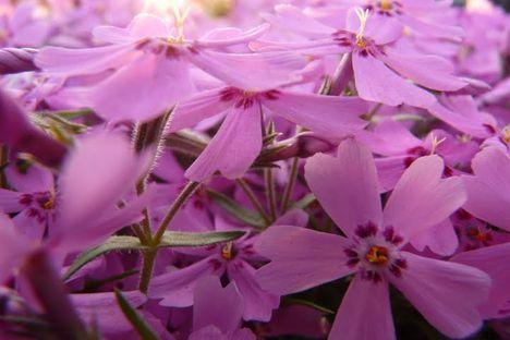 wszystkiego naj  niech ci te kwiatuszki  i piosenka  umila twoje swieto