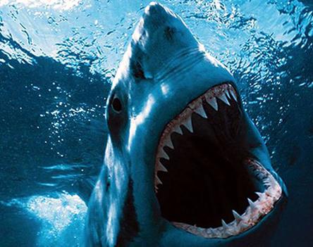 10. helyezett: a nagy fehér cápa
