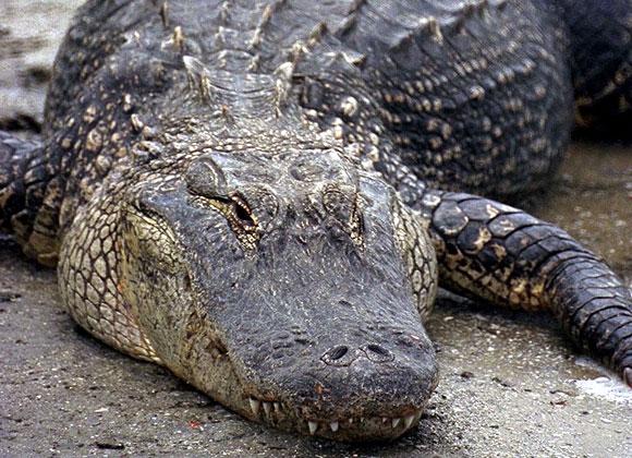 Krokodil The drug that eats junkies  GRcade