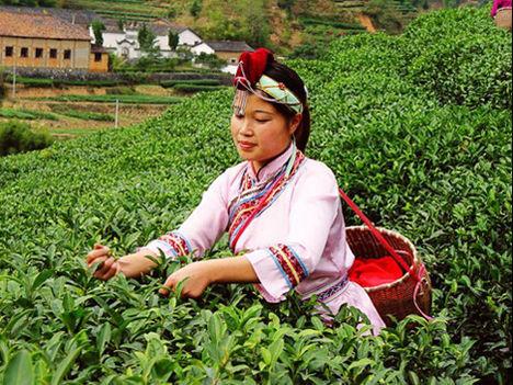Kína, Huiming tea