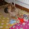 ez az én macim