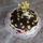 Nyilashoroszkop__torta_491184_98136_t