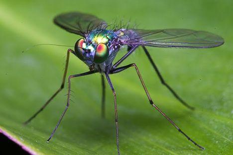 Rovarok, bogarak, pókok, csúszómászók 34
