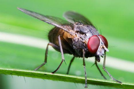 Rovarok, bogarak, pókok, csúszómászók 35