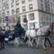 fázós fülü lovak bécsben