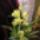 Nyuszika74-Agyagvirágok