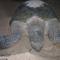 teknős 4