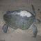 teknős 6