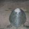 teknős 7