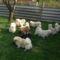 kutyusok 4