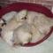 kutyusok 5