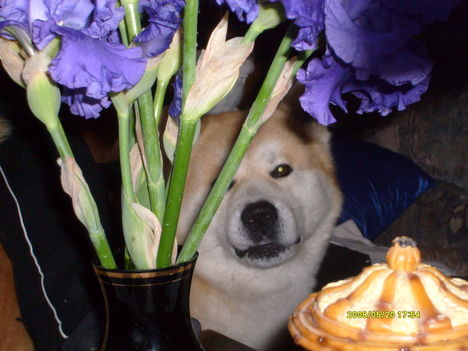 2008.Nico aki a virágot szereti..