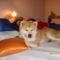 Ez az én ágyam!