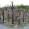 Kopjafák  a 48-49-es szabadságharcban életüket vesztett székely huszárok emlékére a székely-földi Nyergestetőn