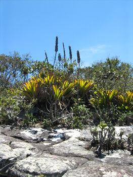 Növényzet a Pai Innacio hegyen