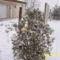 a kerti diszeket ,szallagokat belepte a hó