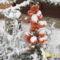 a tüztövis bogyót is belepte a hó