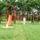 Akacos_major_498018_44245_t