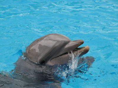 Mexikó_delfin