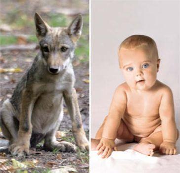 Emberpalánta és állat hasonlóságai 6