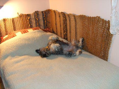 Gazdi ágyában