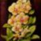 Orchidea 08 Phalaenopsis, selyem, 40x30 cm,