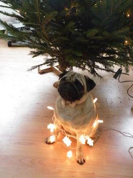 segítek fát díszíteni!!!