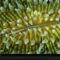 Coelenterate Coral
