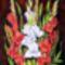 Kardvirág2007 40x30 cm selyem