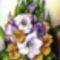 Kardvirág, selyem 32x21 cm
