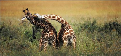 Állati szeretet 5