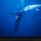 Diver and Bluefin Tuna
