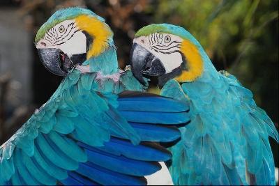 Papagájok (2)