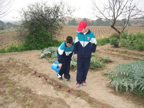 ültetés és locsolás