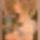 Gosztonyi Edéné ( Nusi ) gobelin képei